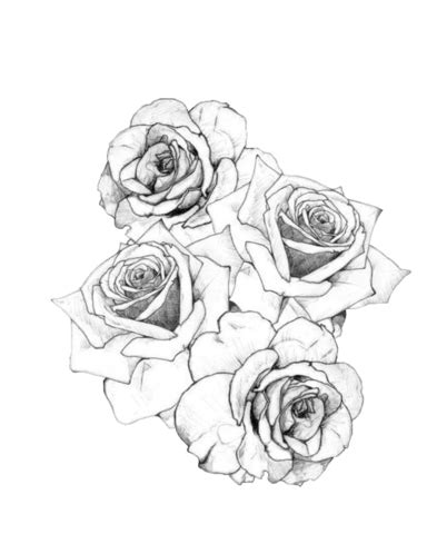 rose tattoo wiki image static black white roses png