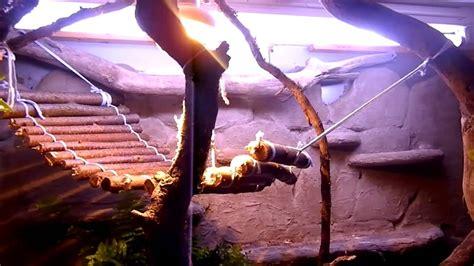 terrarium le le terrarium de mes d eau