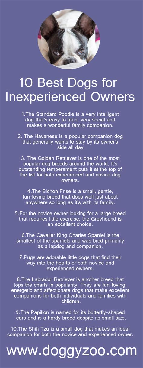 10 best dogs for inexperienced owners doggyzoo comdoggyzoo com