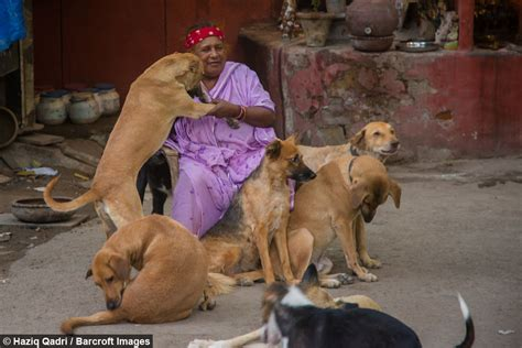 hindi sexy story by ddildo and animal puppy love the dog lady of new delhi cares for 400 strays