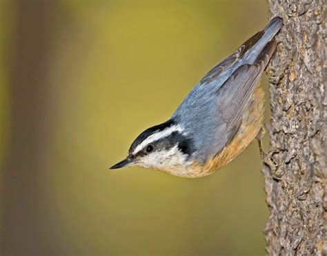 pictures of birds in alabama alabama s official travel guide alabama travel local tips for your alabama vacation