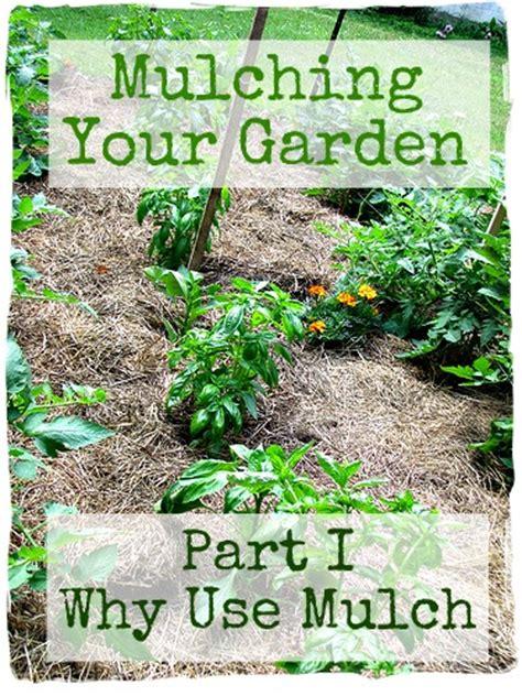 mulching the spring vegetable garden frugal upstate