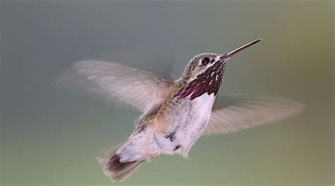 hummingbirds who migrate welcome wildlife