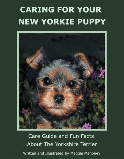 funko pop yorkie caring for your new yorkie puppy care guide and facts about the terrier