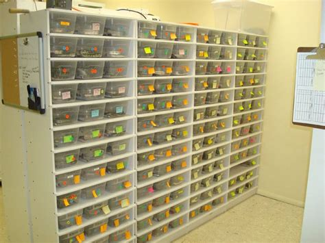 Snake Rack For Sale by 1000 Images About Reptile Racks On You From