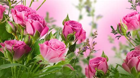 live wallpaper pink rose rose live wallpaper android apps on google play