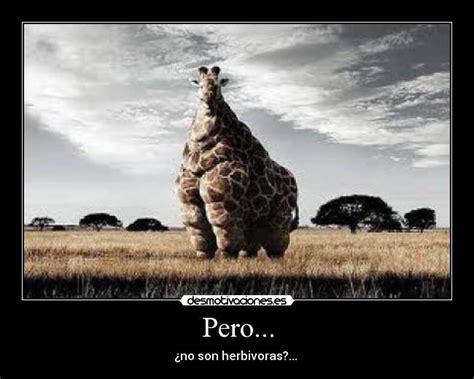 imagenes de jirafas gordas pero desmotivaciones