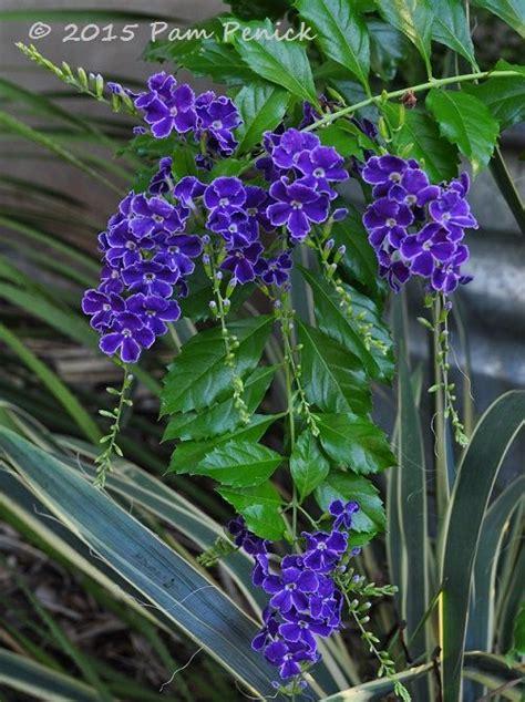 fall flowers for garden fall flowers for a garden digging duranta erecta