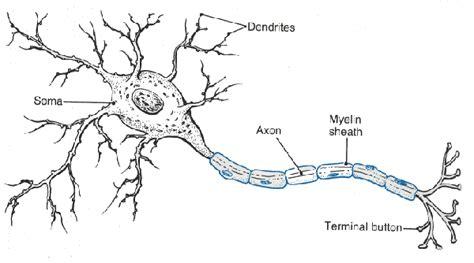 simple neuron diagram basic explanation of how a neuron works