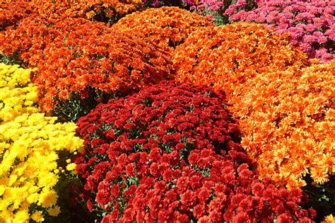 fiori in italia quanto vale il mercato dei fiori in italia