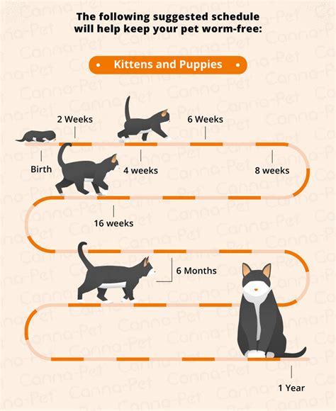 Blood In Puppy Stool After Deworming by Worming Schedules For Cats Dogs Canna Pet