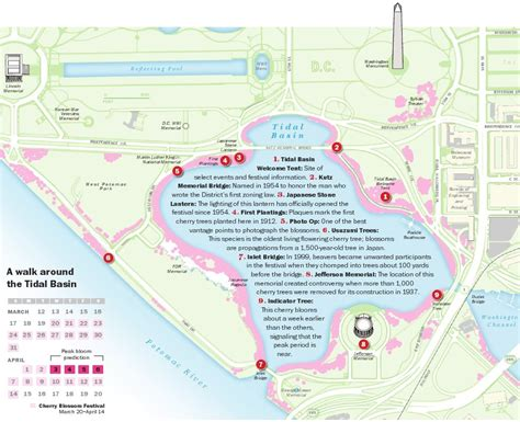washington dc map tidal basin tidal basin bound this weekend here s a map of the cherry