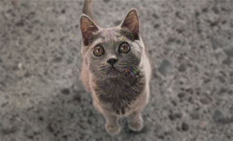 film blue russian cats and dogs movie cat www pixshark com images