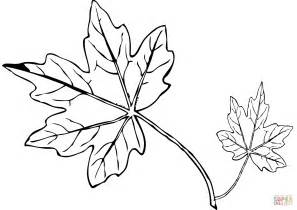 Maple Leaf Coloring Page by Maple Leaf Coloring Page Free Printable Coloring Pages