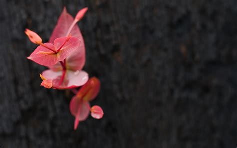 wallpaper grey pink pink and grey wallpaper 253187