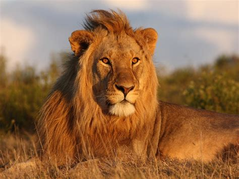 imagenes de animales terestres african safari travel review botswana south africa