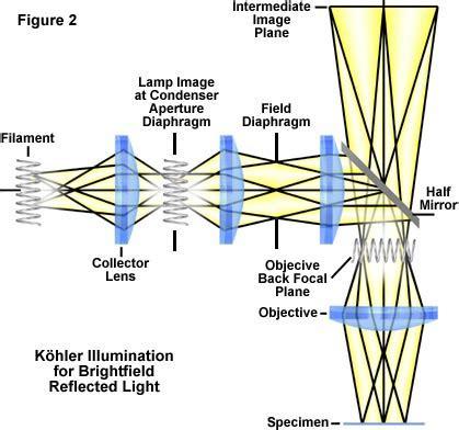 molecular expressions microscopy primer: anatomy of the