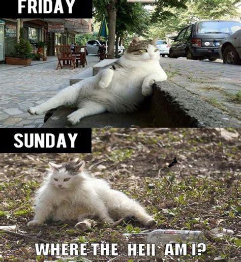 Meme Weekend - where the hell am i weekend meme never shutup