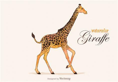 imagenes de jirafas blanco y negro jirafa acuarela descargar vectores gratis