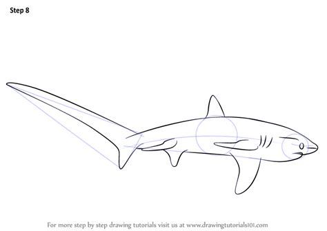 thresher shark coloring page thresher shark drawing sketch coloring page