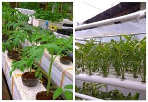 cara membuat hidroponik wick system 5 teknik dan 2 metode menanam sayur di pipa paralon dan
