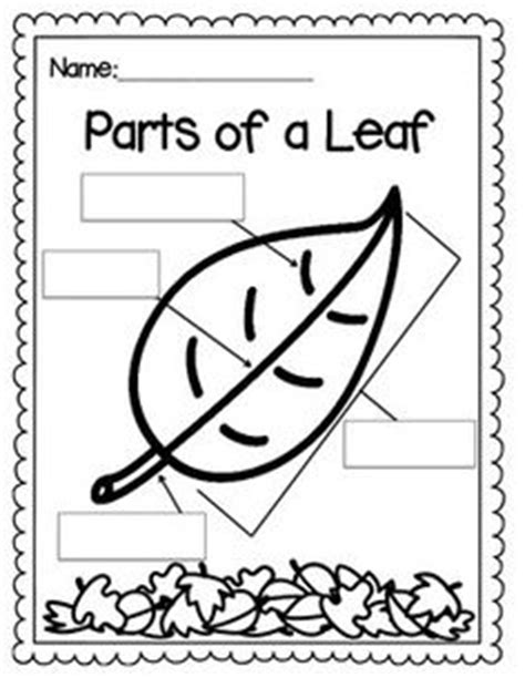 coloring page parts of a leaf parts of a leaf for kids worksheet theleaf co