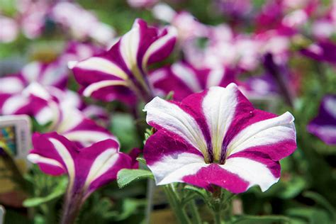 north carolina flower north carolina nurseries facts