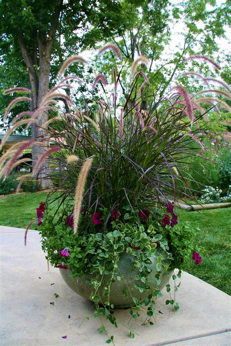 purple fountain grass petunias and trailing ivy make for a lovely vertical container garden
