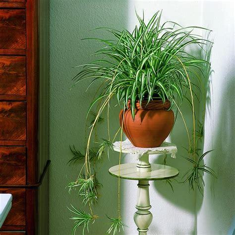 piante ricadenti da interno piante ricadenti piante per giardino variet 224 piante