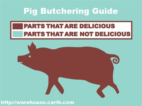what part of the pig does bacon come from diagram parts of the pig that are delicious