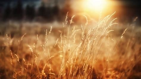 Morning Sunshine Wallpapers   HD Wallpapers   ID #12412