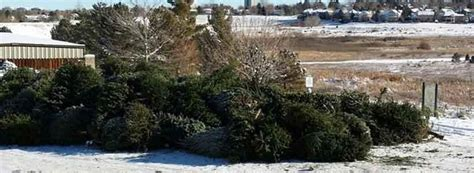 free christmas tree recycling programs mile high on the