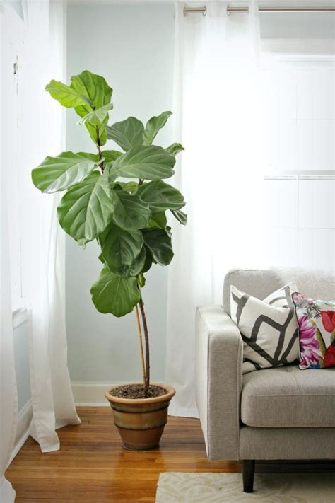 best plant for bedroom 25 best ideas about bedroom plants on pinterest plants