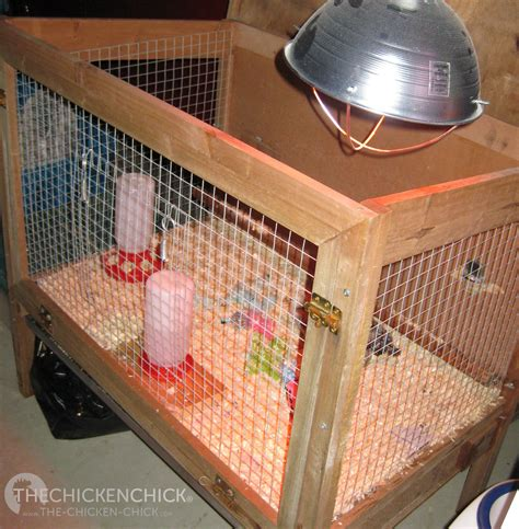 alternative to heat l for chickens the dangers of brooder heat ls a safe alternative