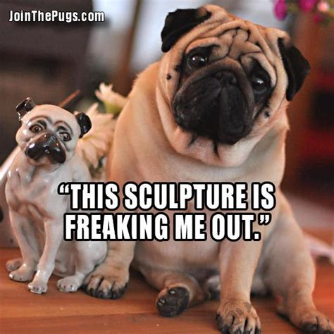 pug freaking out mini pug join the pugs