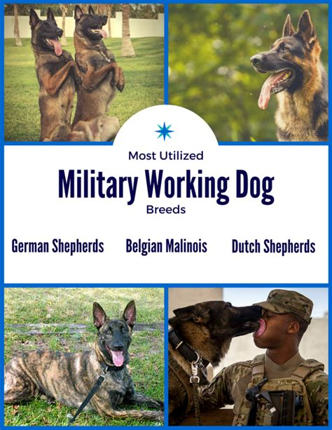 k9 breeds k9 veterans day honoring working dogs vfw southern conference