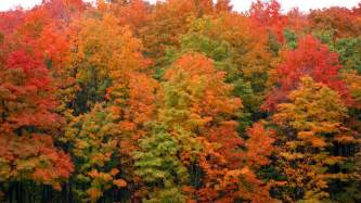 in color michigan 5 spots to see michigan s rich fall colors