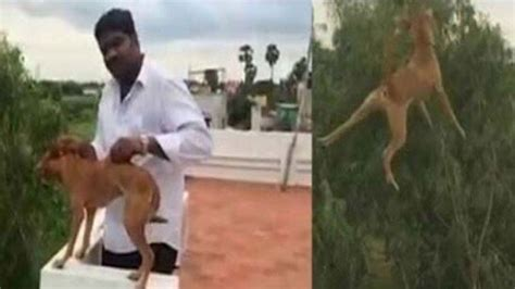 petition animal welfare board  india stringent penalties  zoosadism   offences