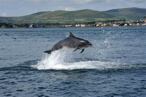 fast boat to ireland great blasket island accommodation and boat tours