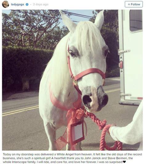 Tempat Pensil Kode Kuda Poni Pink gaga dapat hadiah natal kuda poni tribunnews