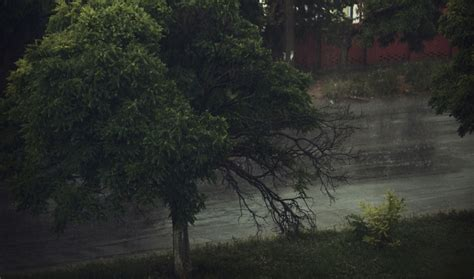 Rainy Summer by Summer Rainy Day Hd Wallpaper Stylishhdwallpapers