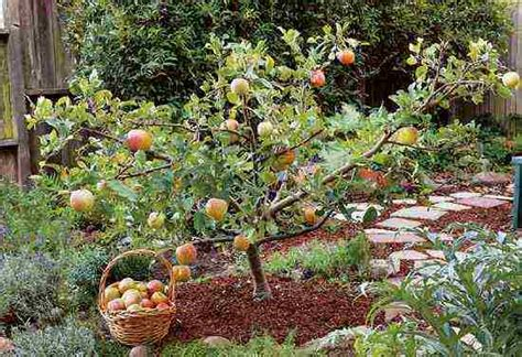 Garden Design With Pruning Plants Create Small Fruit Trees With This Pruning Method Organic Gardening Earth News