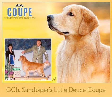 patty pace golden retrievers the weekly winners gallery from the akc