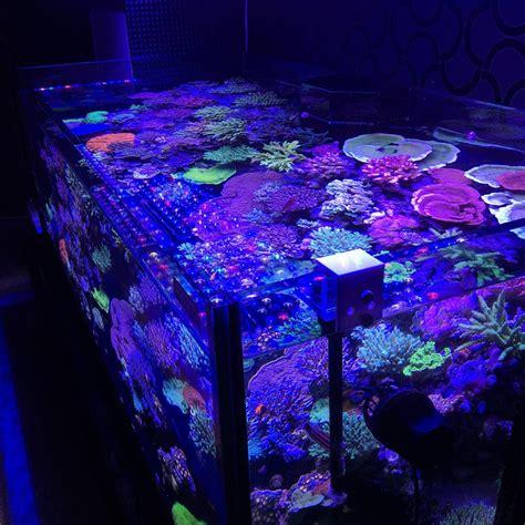 Aquarium Led Lighting Photos Best Reef Aquarium Led Aquarium Led Light