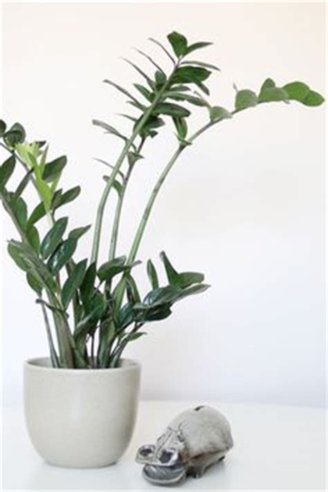 plants that do not need much sunlight low lights plants and indoor on pinterest