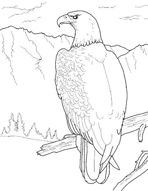coloring pages for eagle free printable eagle coloring pages for kids