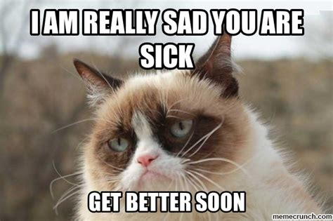 Sick Cat Meme - sick cats quotes quotesgram