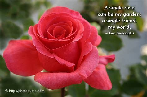 rose can sayings quotes leo buscaglia photo quoto