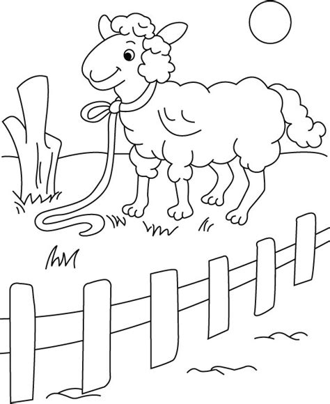sheep family coloring page picket fence coloring printables coloring pages