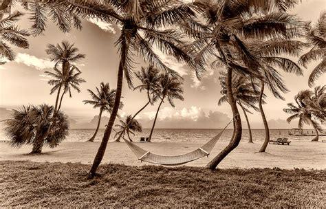 on the beach hammocks on the beach ring fine art
